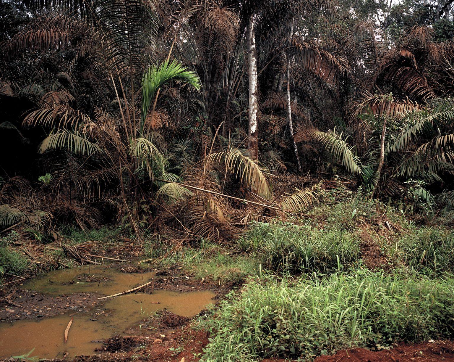 Sumpfwald, Kamerun 2016